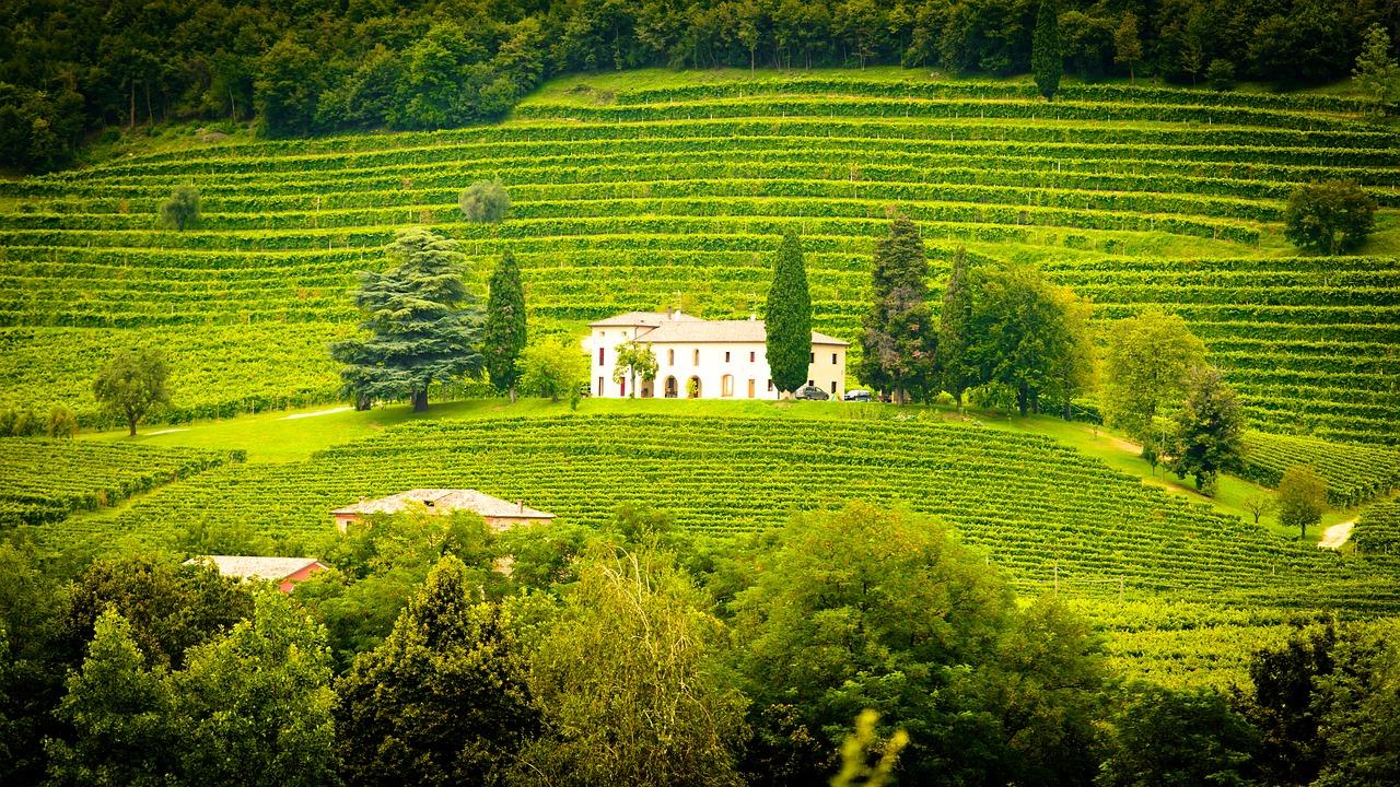Das Champagner-Weingut Charles Mignon