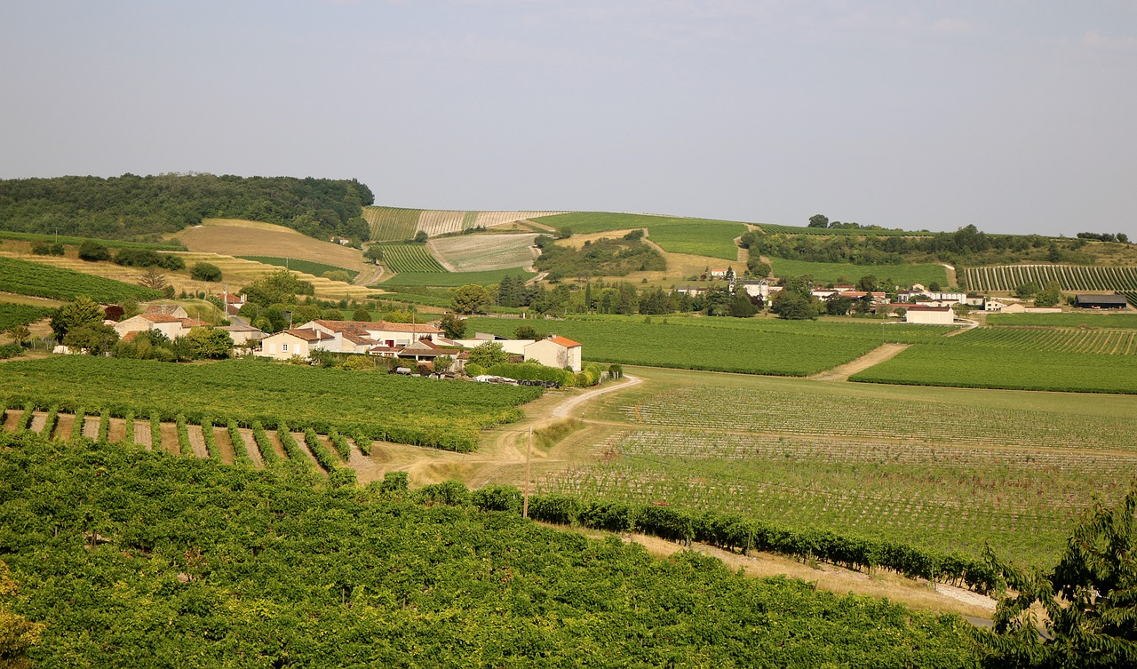 "Cognac vom ""Château de Montifaud"""